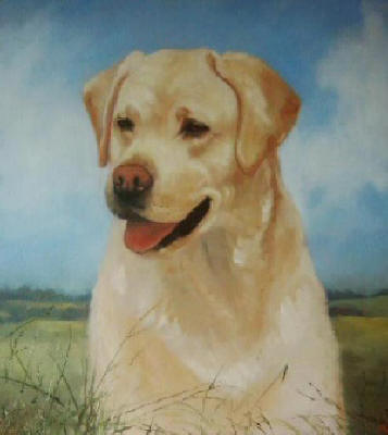 Yellow Labrador - Pet Portraits from photographs