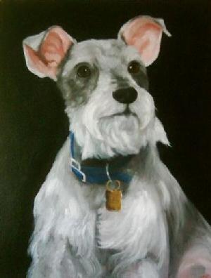 Pet Portraits Dog - Schnauzer