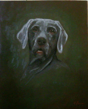 Weimaraner  - Pet Portraits from photographs