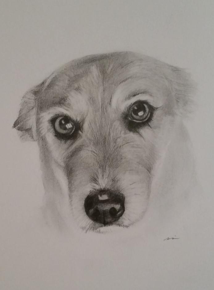 Pencil Portrait Gallery - Pet Portraits at Portrait Corner How To Draw A Puppy