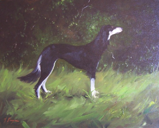 Saluki in Oils