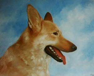 Pet Portraits Dog - Alsation