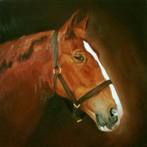 Pet Portraits Horse