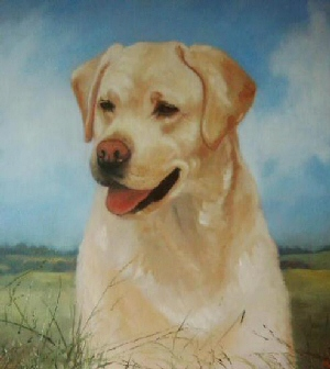 Pet Portraits Labrador