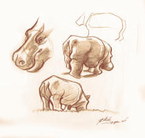 Learn how to draw animals